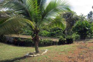 auswanderungsziel-panama-tropen