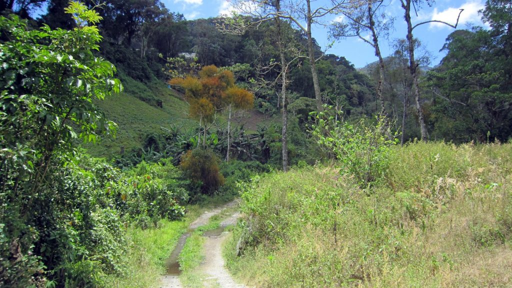 boquete-quetzal