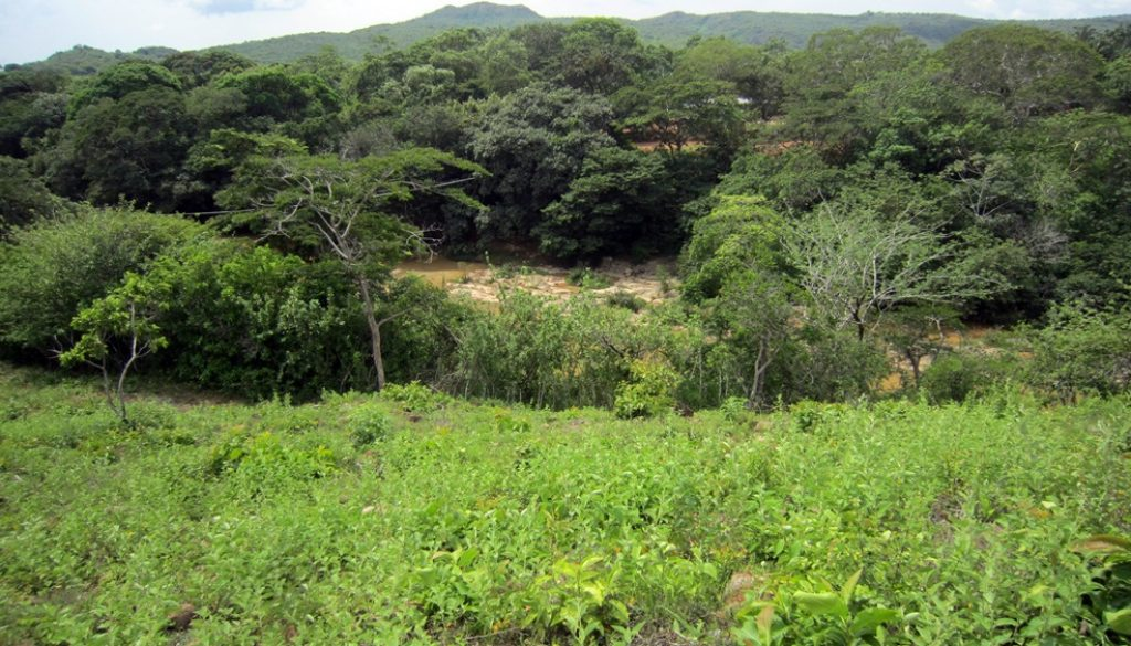 cocle-grune-landschaft