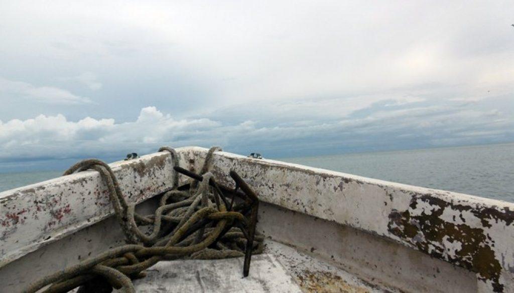 Walbeobachtung in Panama