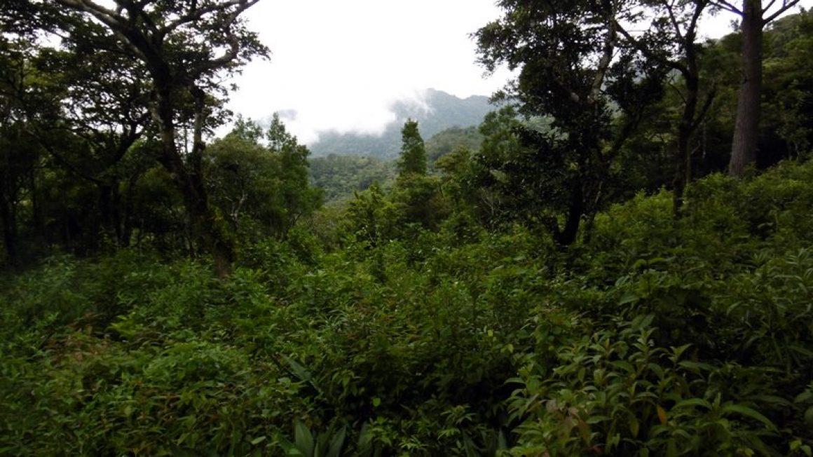 Großes Grundstück in Panama mit 5,7 ha im Chiriquí –  Hochland
