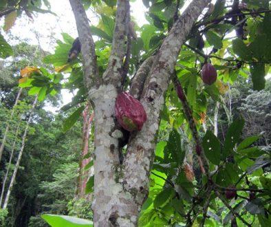 Leben in Panama – Alleine oder in Gemeinschaft ?