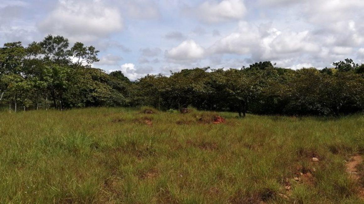 Großes Baugrundstück in Panama 5000 m²
